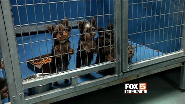 The 27 puppies rescued from a burning pet store were placed in the custody of Animal Foundation. (File/FOX5)