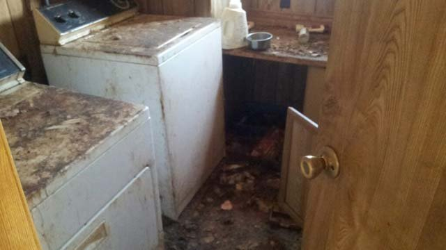 A laundry room inside a home in Pahrump where the bodies of upwards of 25 cats and dogs were discovered. (Source: Nevada Voters For Animals)