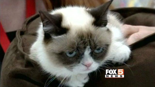 Tardar Sauce, otherwise known as Grumpy Cat.