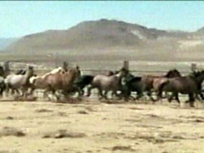 An undated image of wild horses. (File)
