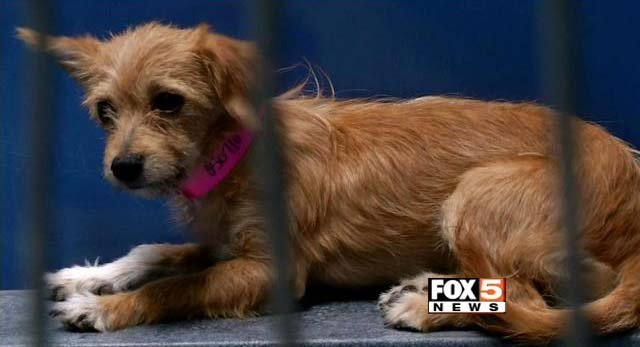 A dog is shown at The Animal Foundation in an undated image. (File/FOX5)