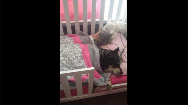 Raven the dog is napping next to a toddler named Addison. (kristinnc2002/YouTube)