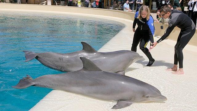 Dolphin Dies In The Mirage Casino Habitat Cause Unknown Fox5 Vegas Kvvu
