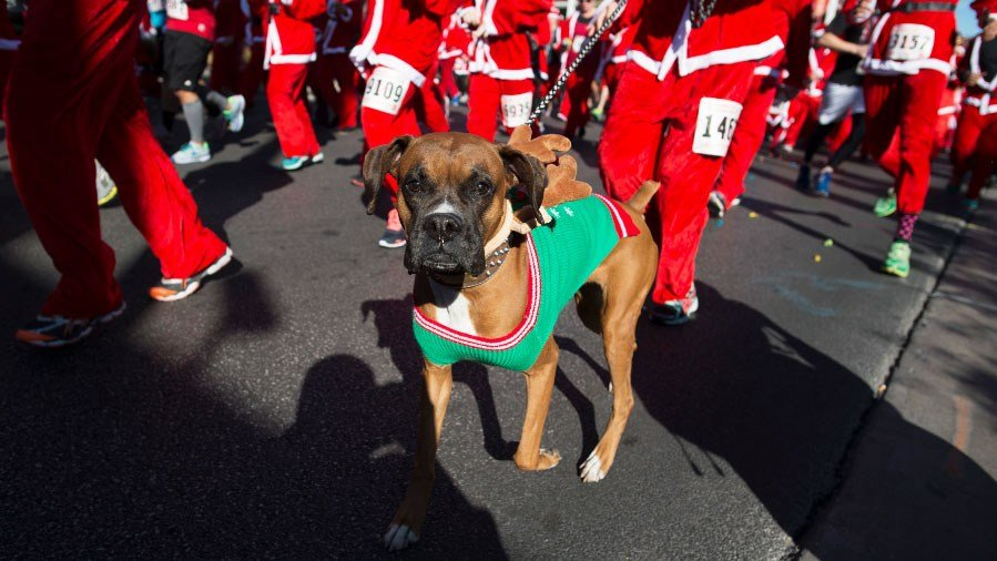 Dog participates in the Las Vegas Great Santa Run on Dec. 5, 2015. (Sam Morris/Las Vegas News Bureau)