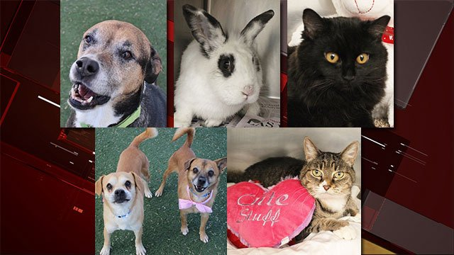Metro Atlanta Dog Adoptions